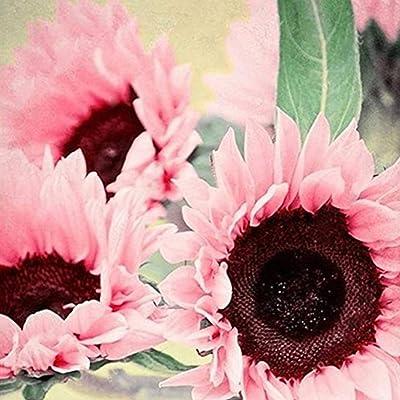 Flower Seeds Variety Pack 15Pcs Pink Sunflower Seeds Bonsai Plant Office Home Garden Yard Floral Decor - Pink Sunflower Seeds : Garden & Outdoor