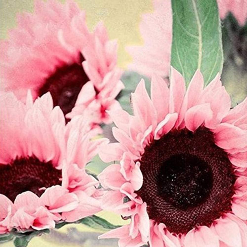 lamta1k 15Pcs Semillas de Girasol Rosadas Bonsai Calidad de la Planta y Alta tasa de Supervivencia Oficina Jardín del hogar Decoración Floral - Semillas de Girasol Rosa