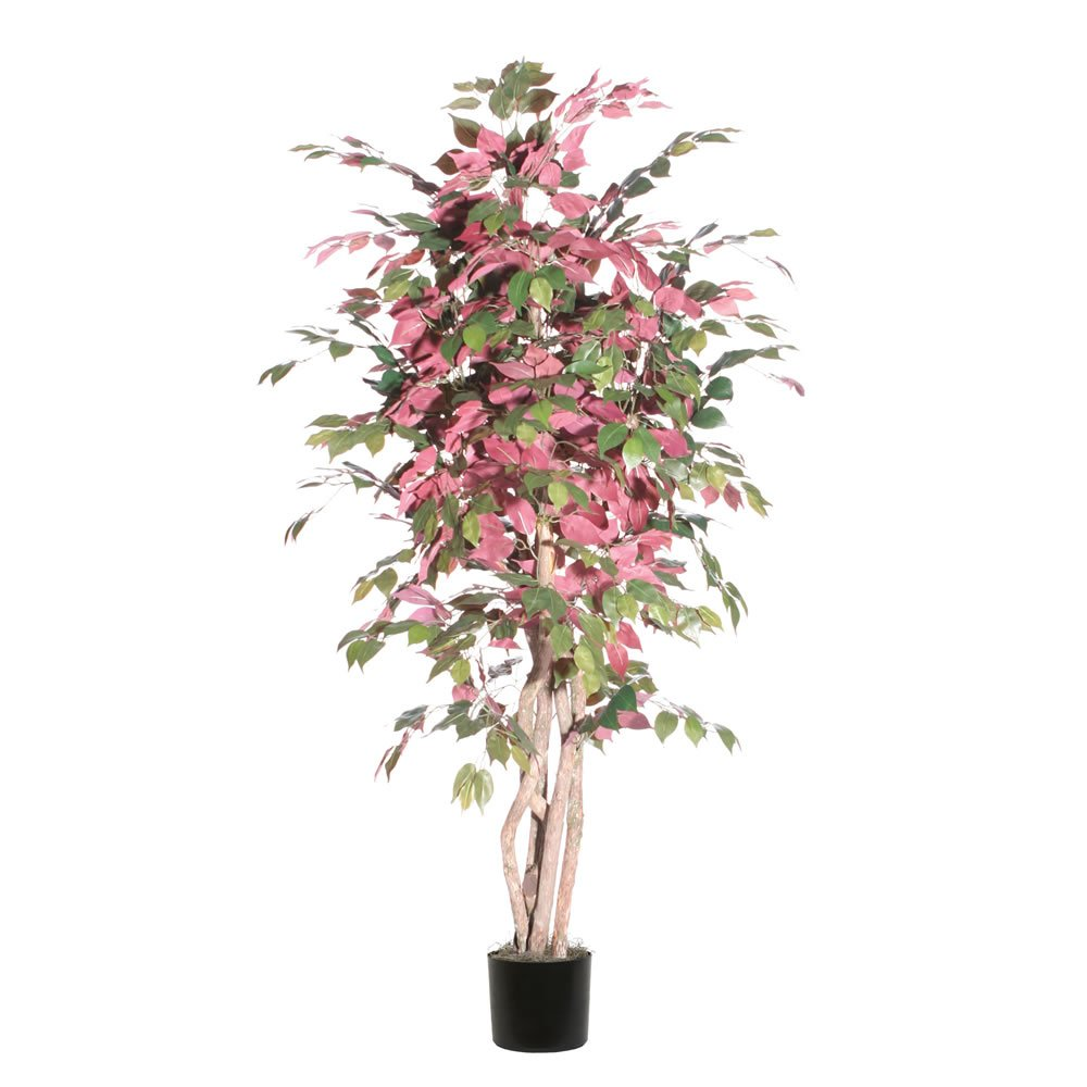 Vickerman TEX0360-07 Everyday Capensia Tree, 6', Green/Red