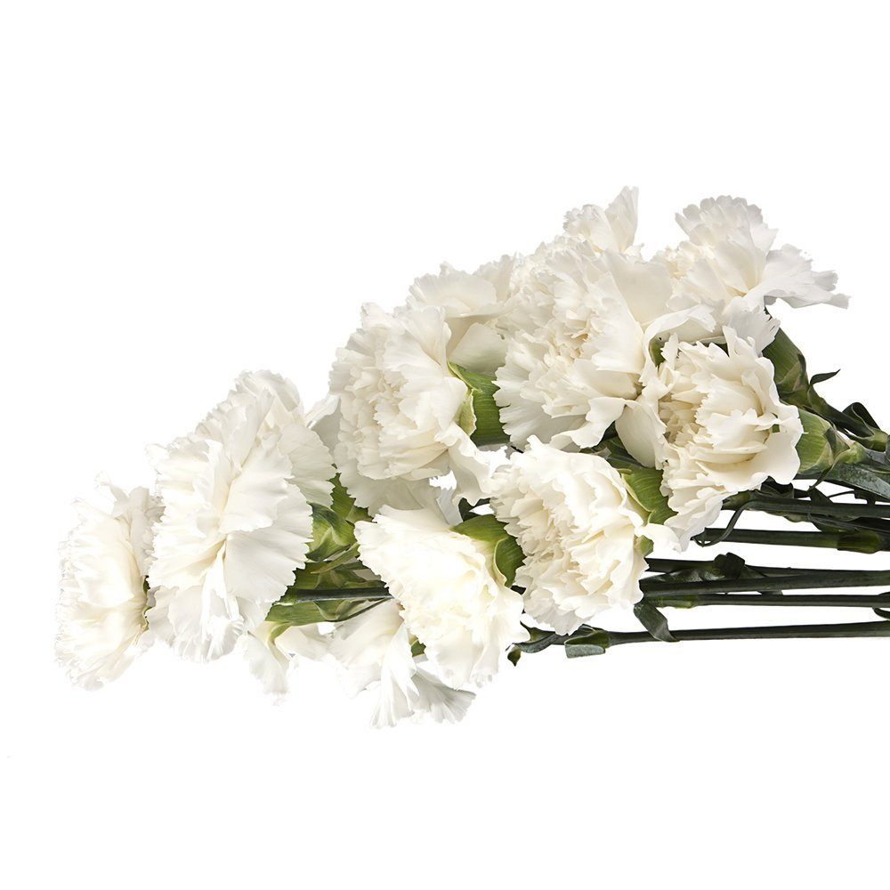 Cut Flowers - Wholesale Carnation White 100 stems