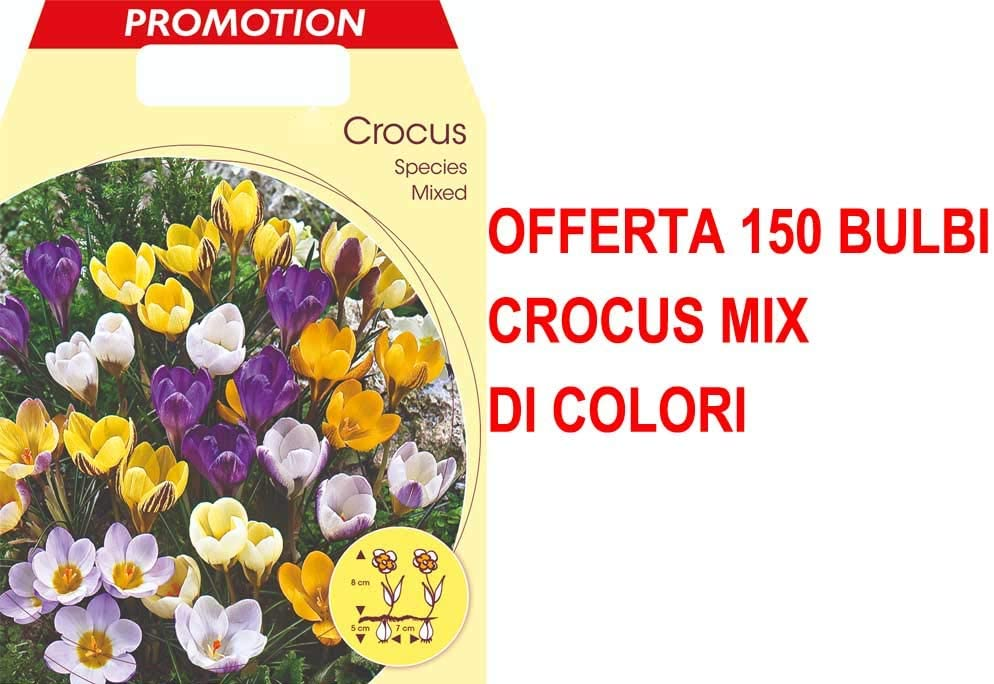OFFERTA 150 BULBI CROCUS SPECIES MIX DI COLORI BULBS BULBES