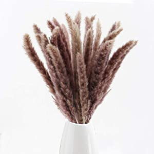 GTIDEA Dried Pampas Grass Decor 50pcs 17 Inch Small Natural Phragmites Communis Reed Plumes Dried Stems Bunch for Wedding Vase Door Wreath Decor Brown