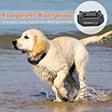 Petrainer PET998DB1 330 Yards Rechargeable and Waterproof Dog Training Collar with Safe Beep, Vibration and Shock Electronic Electric Collar