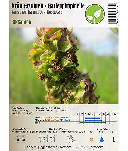 Semillas de hierbas - Jardínpimpinelle / Pequeño Burnet / Sanguisorba minor 30 semillas