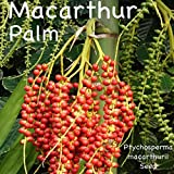 ~Macarthur Palm~ Ptychosperma macarthurii Elegant Clumping Tree 30 Fresh Seeds