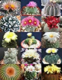 zane book package - RARE CACTUS MIX rare plant exotic cacti flowering desert succulent seed 20 seeds