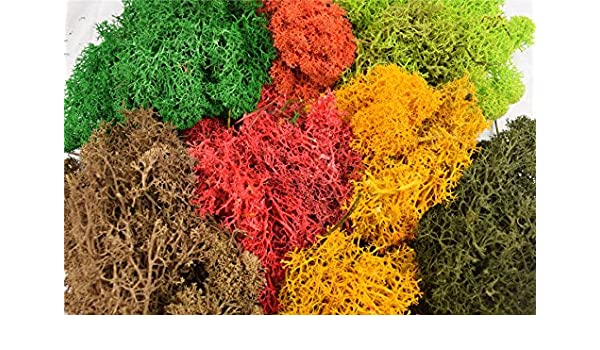 Amazon.com: wws Model Lichen Foliage Multi-Coloured Pack ...