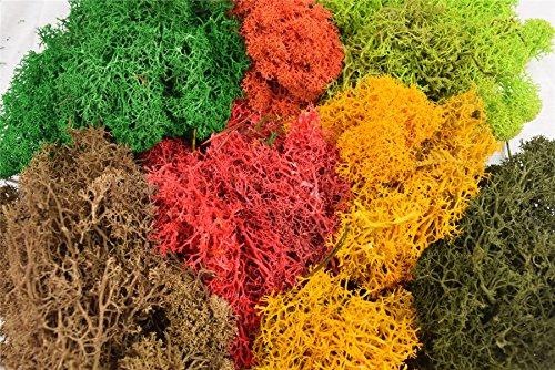 WWS Model Lichen Foliage Multi-Colored Pack de Árboles, setos, arbustos, Musgo de Renos, paisajes, ferrocarriles, Wargames