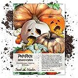 Seed Needs, Spooky Pumpkin Mixture (Cucurbita pepo/maxima) 50 Seeds NON-GMO