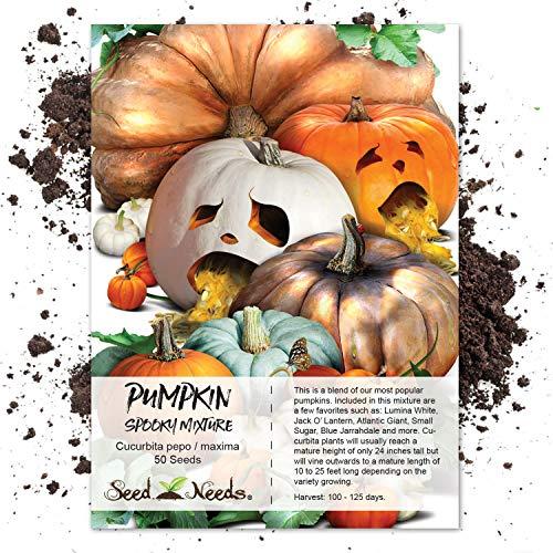 Seed Needs, Spooky Pumpkin Mixture (Cucurbita pepo/maxima) 50 Seeds ()