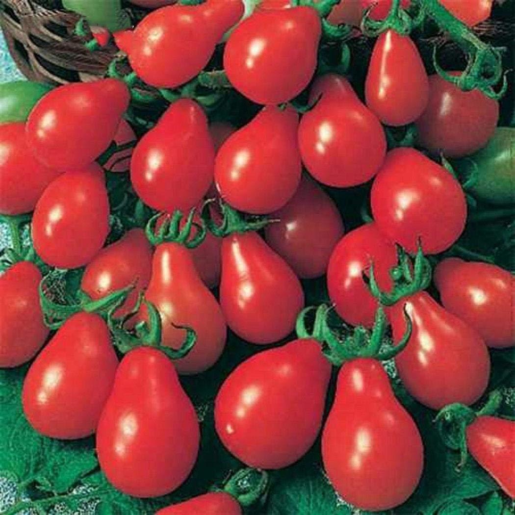 Mymotto 100 Unids Home Garden Balcony Organic Delicious Fruit Semillas Raras De Tomate Frutales