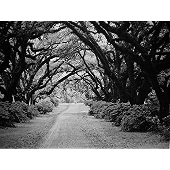amazon com tree tunnel black white oil painting on canvas