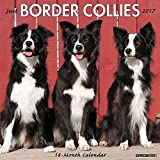 Just Border Collies 2017 Wall Calendar