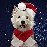 PULEIDI - Disfraz de Papá Noel para gato, con sombrero y bufanda para gato, perros pequeños, perfecto para día festivo, Navid