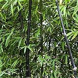 Fedi Apparel 100 Grains/Pack Bamboo Seeds Easy Grow Courtyard Decorative Garden
