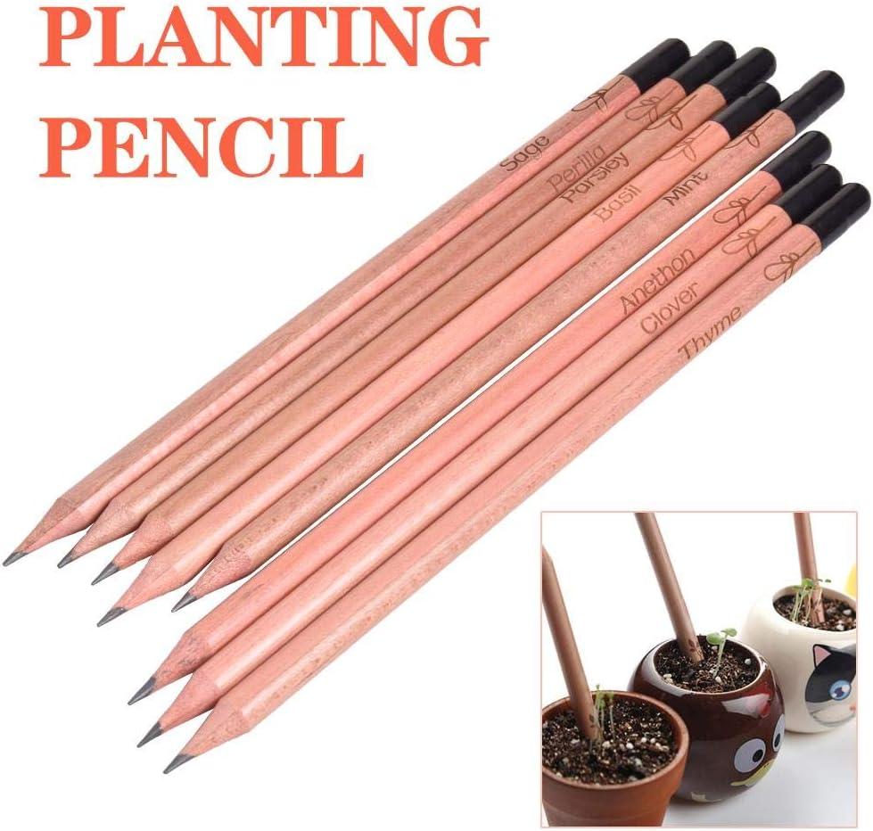 Crayons de Graphite /à Planter /à Planter Crayon de Bourgeon de Germination didatecar 8 pi/èces//Ensemble Crayon de Germination Plante en Pot de Bureau Bricolage Compatible