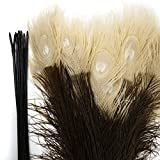 ZUCKER Peacock Tail Feather Eyes Tipped - 25 - 40''- Brown/Eggshell
