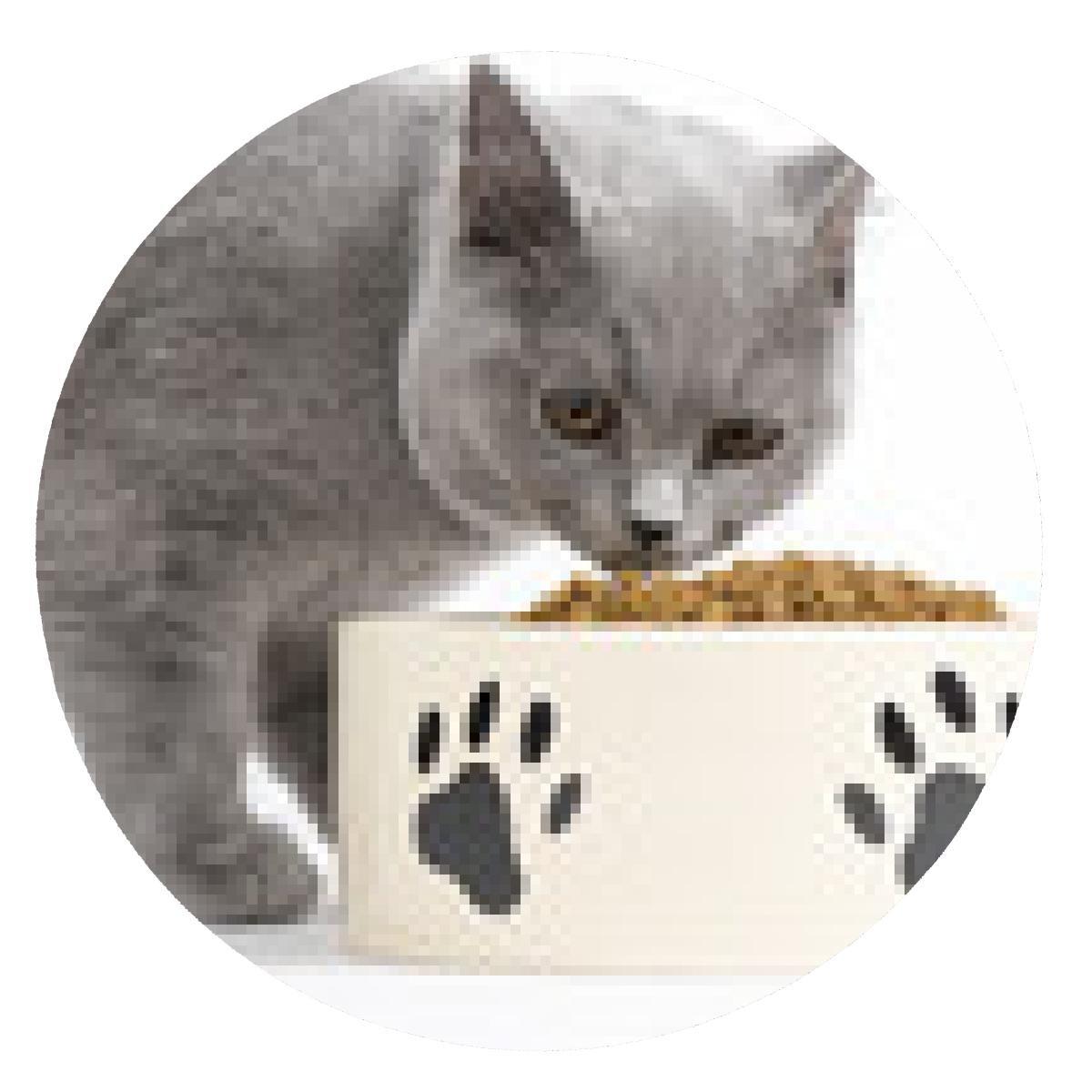 alfombrilla de ratón Gato mientras se come / comida seca para gatos: Amazon.es: Electrónica