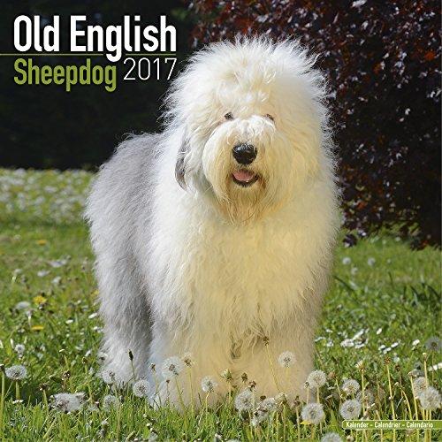 Old English Sheepdog Calendar 2017 - Dog Breed Calendar - Wall Calendar 2016-2017
