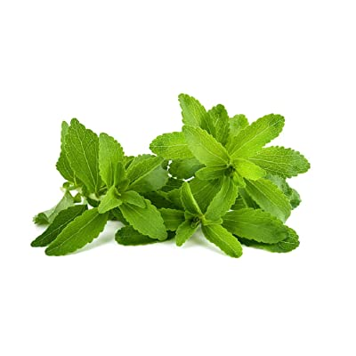 HOT sale! 400 Stevia Seeds, Stevia Herbs Seeds Green Herb, Stevia Rebaudiana Semillas for Garden Planting Healthy : Garden & Outdoor