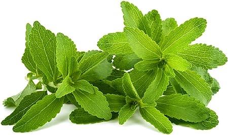 Amazon.com: vente CHAUDE!  400 graines de stévia, graines d'herbes de stévia vertes ...
