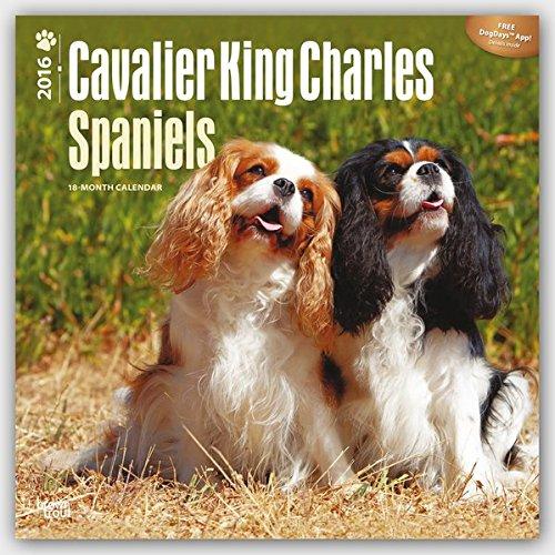 Download Cavalier King Charles Spaniels - 2016 Calendar 12 x 12in pdf