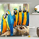 Where to Buy Shower Curtains Where To Buy Unique Cute Parrot Birds and Zebra Polyester Waterproof Shower Curtain-Bathroom Accessoriess 72x72
