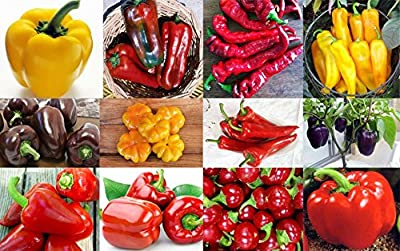 This is a MIX!!! 30+ ORGANICALLY GROWN Sweet Pepper Mix Seeds, 12 Varieties Heirloom NON-GMO, Pimento, Purple Beauty, From USA