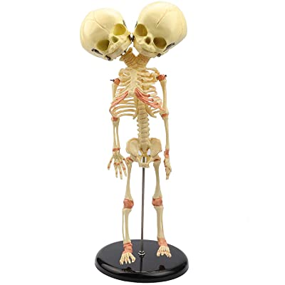 Human Skeleton Model Miniature Baby Skeleton Model with Double Heads for Display Study Teaching and Gift for Halloween: Industrial & Scientific