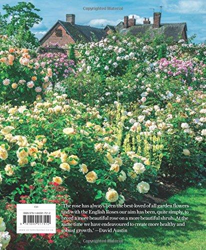 The English Roses David Austin 9781840917512 Amazon Books