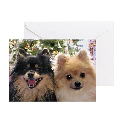 Amazoncom Cafepress Pomeranians Greeting Card 10 Pack Note