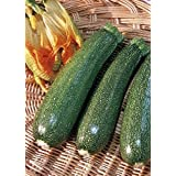 TROPICA - Zucchini – Defender (Cucurbita pepo) - 10 Seeds - Vegetable specialities