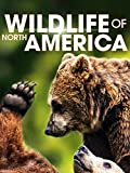 Wildlife of North America