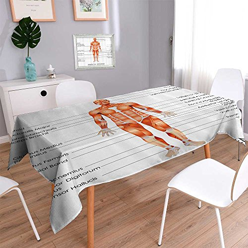Jacquard Polyester Fabric Tablecloth Muscle System Diagram of Man Body Features Biological Elements Medical Heath Summer & Outdoor Picnics 70''x120'' by Vanfan