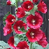 Hibiscus syriacus, Purple Rose Mallow Althaea Seeds, Seeds Hardy Shrub Rose, 30 Seeds, Seeds of f25 red