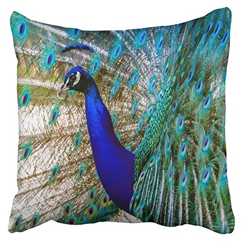 Accrocn Pillowcases Beautiful Cobalt Blue Turquoise Peacock Decorative Throw Pillow Covers Protectors Cases Cushion Cover Case Couch Sofa Size 18x18 inches(45x45cm) One Side print (Decorative Peacock Items)