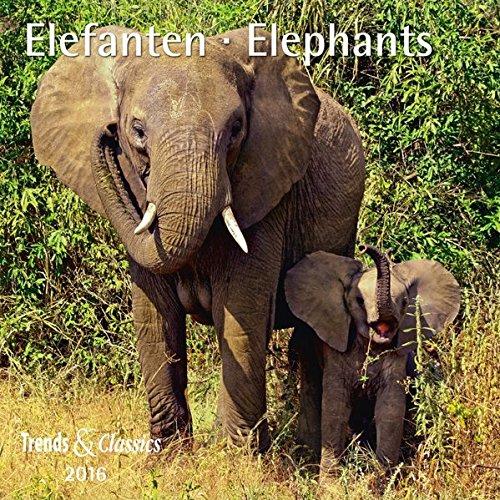 Elefanten T&C 2016