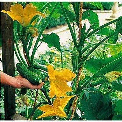 Bravet 50pcs/Bag Dutch Cucumbers Seed Cucumbers Sativus Linn Vegetable Seed Home Garden Vegetables : Garden & Outdoor