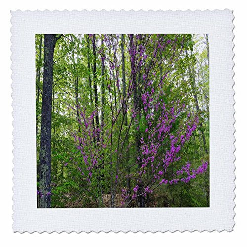 3dRose TDSwhite - Spring Seasonal Nature Photos - Early Spring Lilac Branches - 10x10 inch Quilt Square (qs_284255_1)