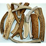 "XLarge 8""-10"" Long - Antler Dog Chew From Top Dog Chews - Single Antler"