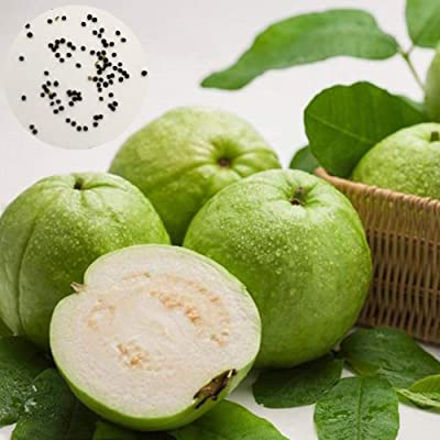 Fanthee Guava Seeds,1000Pcs Psidium Guajava Guava Seeds Sweet Delicious Fruit Garden Yard Tree Plant Guava Seeds: Sports & Outdoors