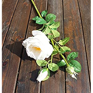"Meide Group USA 28"" Large Handmade Real Touch Cabbage Rose Artificial Spring Flower in Milky White with Thorns (1 PC) 76"
