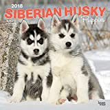 Siberian Husky Puppies 2018 12 x 12 Inch Monthly Square Wall Calendar, Animal Dog Breeds Husky