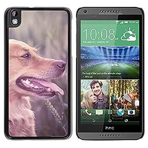 TopCaseStore / la caja del caucho duro de la cubierta de protección de la piel - Labrador Retriever Field Brown Longhair Dog - HTC DESIRE 816
