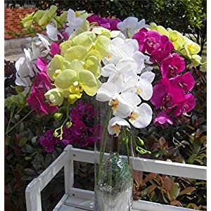5pcs Latex Orchids 73cm Real Touch Orchid Fake Phalaenopsis 8 Heads for Wedding Party Home Centerpieces Artificial Decorative Flowers 4