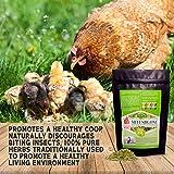 Pampered Chicken Mama Backyard Chicken Nesting