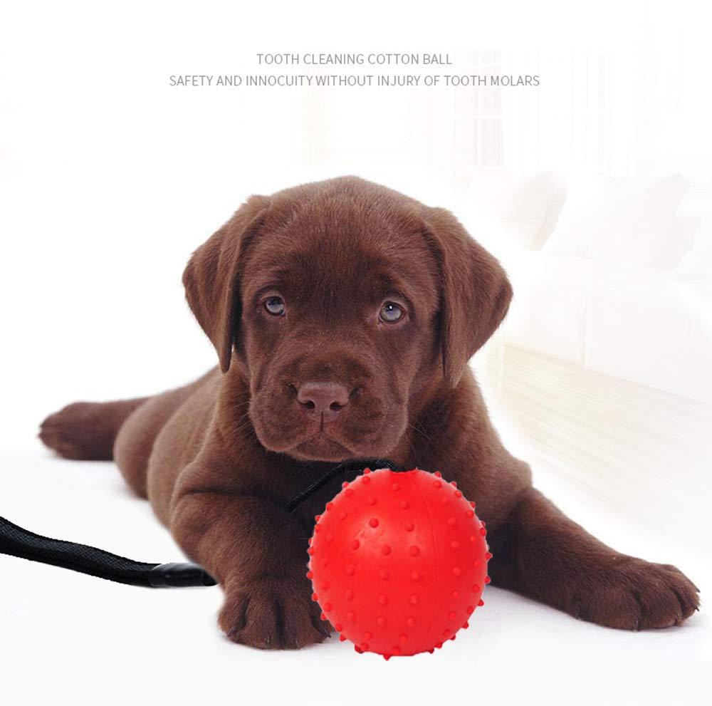 Gatto Dellanimale Domestico Cane Giocattolo Palline per Pulito dei Denti Pezzi Palla Giocattolo con Corda 2Pcs,Purple,5cm XIHONGSHIR Premium Palline per Cani in Gomma