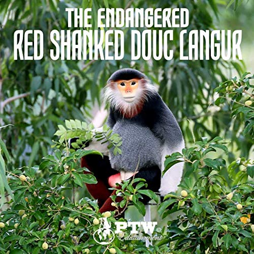 The Endangered Red Shanked Douc Langur