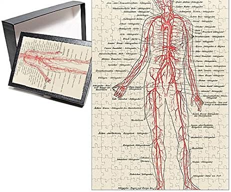 Amazon.com: Photo Jigsaw Puzzle Of Medical/anatomy/blood: Home & Kitchen