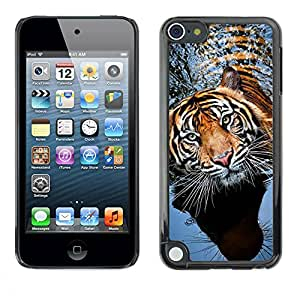 PC/Aluminum Funda Carcasa protectora para Apple iPod Touch 5 tiger swimming nature animal tropical / JUSTGO PHONE PROTECTOR